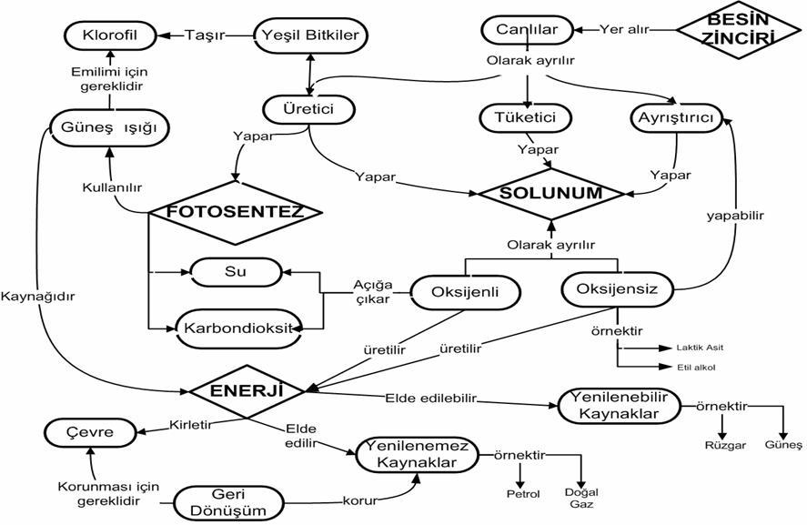 Hücre bölünmes canlılar ve enerji